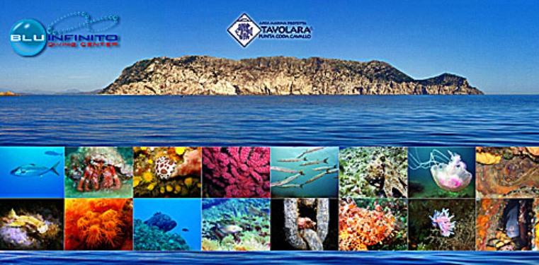 Blu Infinito Diving Center, San Teodoro, Sardinien | italien.de