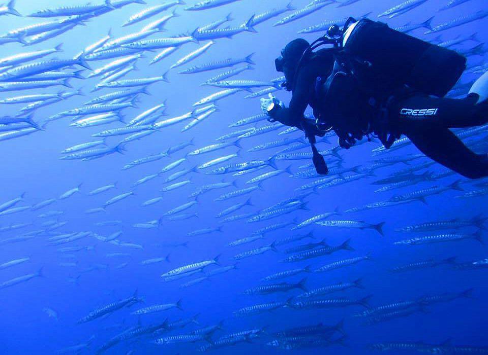 Diving Center Ustica, Sizilien | italien.de