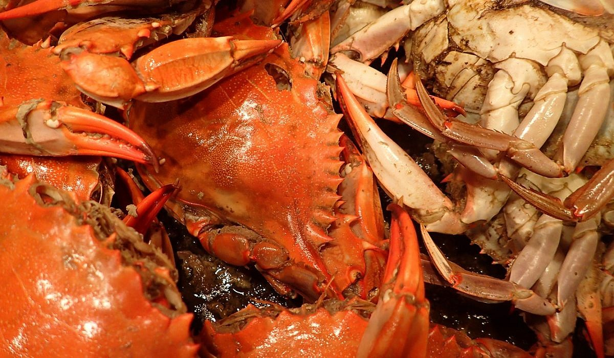Krabben (ital.: Granchi) | italien.de