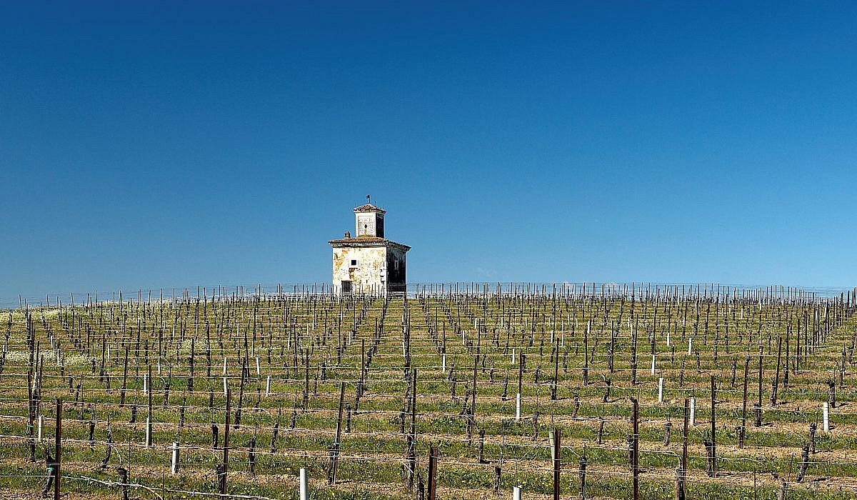 Weinbaugebiet Franciacorta, Lombardei | italien.de