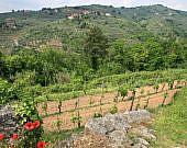 Weinberg-Vinci-Toskana-Italien