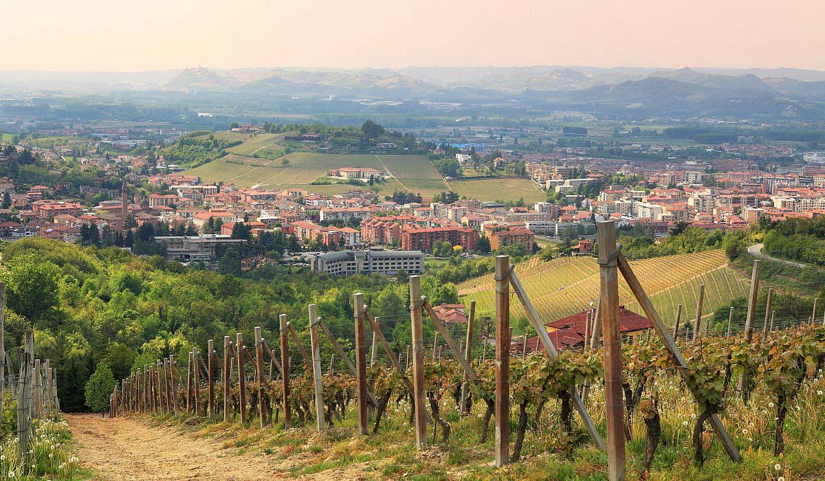 Weinberg bei Alba, Piemont | italien.de