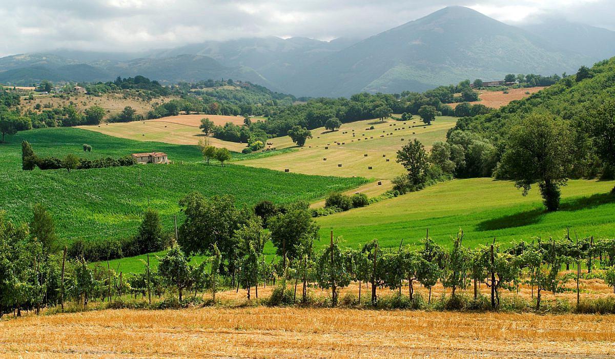 Weinberge bei Rieti, Latium | italien.de