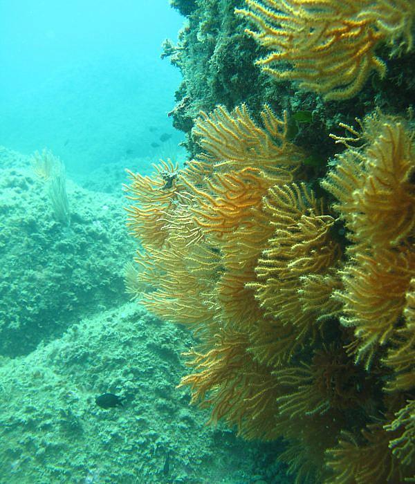 Feeldive Diving Center, Scarlino, Toskana| italien.de